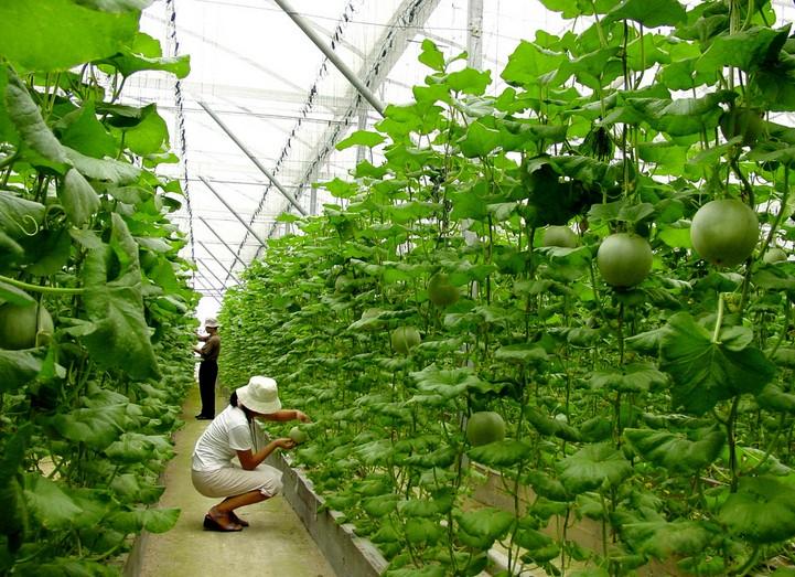农村农业发展项目_2014年农村小本创业项目发展农村农业农民收