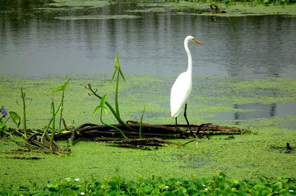 公园内动物资源丰富,有野生动物108种